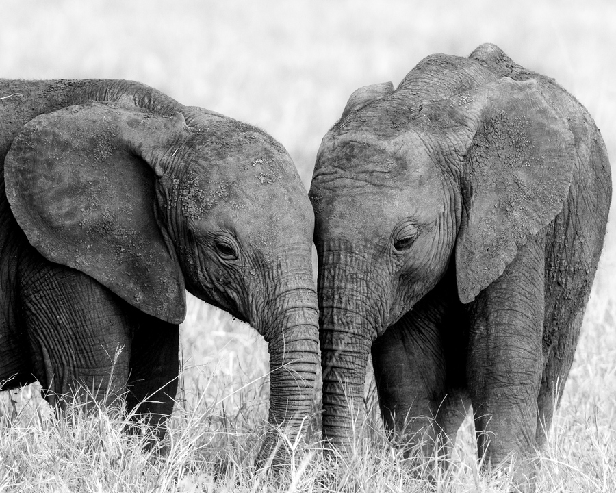 Elephant Love | Danielle Klebanow Photography - photo#27