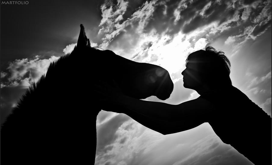 Horse silhouette danielle klebanow photography